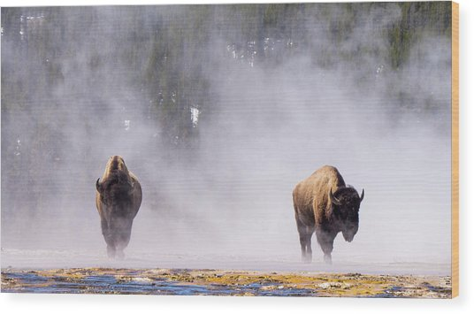 Bison At Biscuit Basin Wood Print