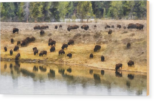 Bison At Indian Pond Wood Print
