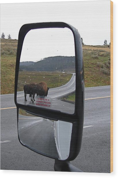 Bison In My Rear View Wood Print