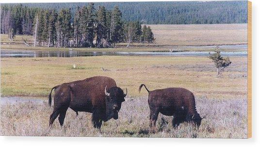 Bison In Yellowstone Wood Print