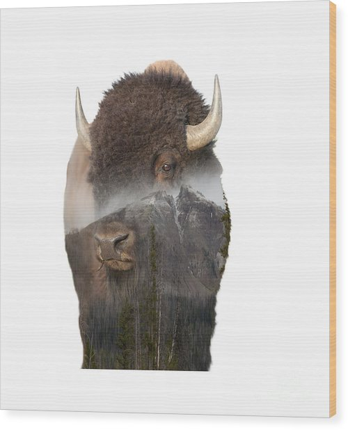 Bison Mountain  Wood Print