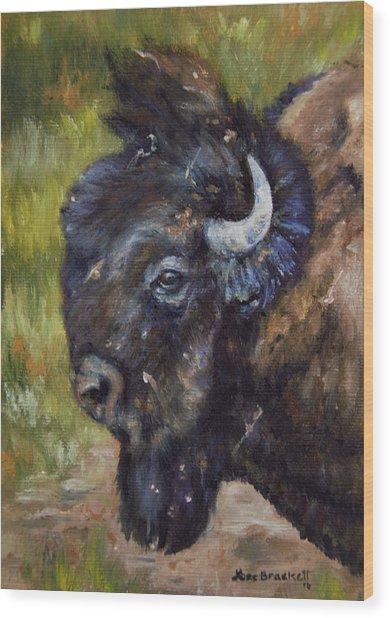 Bison Study 5 Wood Print