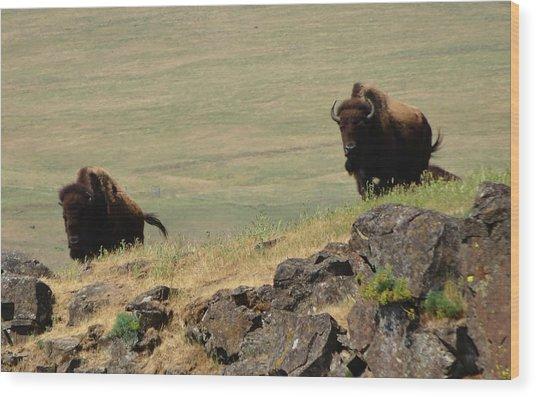 Bison Watch Wood Print