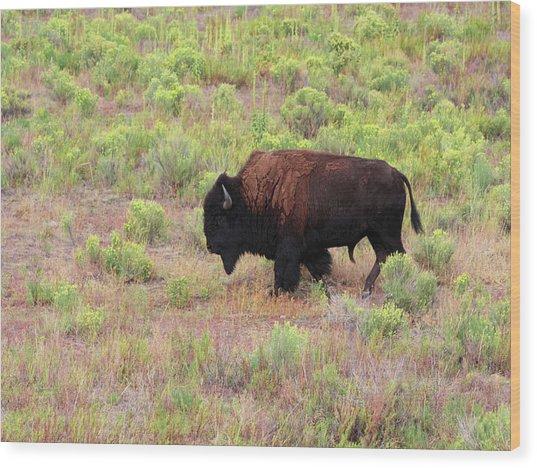 Bison1 Wood Print