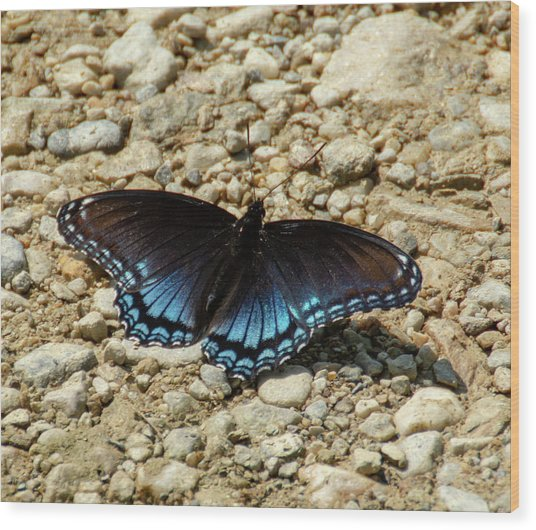 Black And Blue Monarch Butterfly Wood Print
