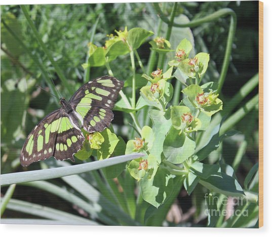Black And Green Butterfly Wood Print