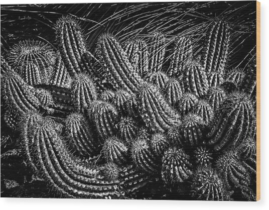 Wood Print featuring the photograph Black And White Cactus by Harry Spitz