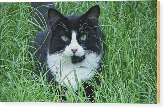 Black And White Cat With Green Eyes Wood Print