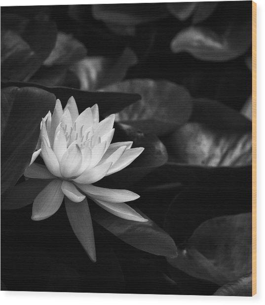 Black And White Flower Nine Wood Print