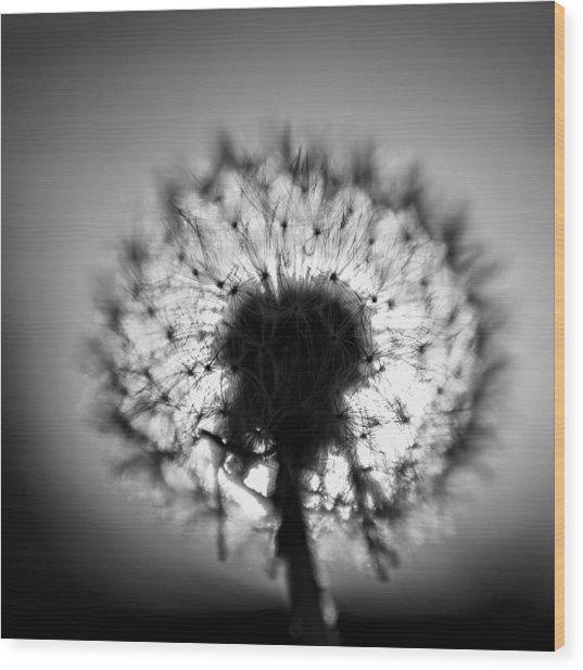 Black And White Flower Ten Wood Print