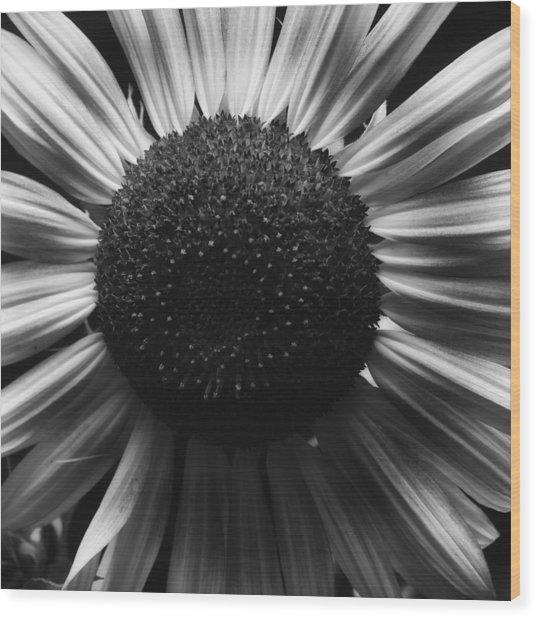Black And White Flower Twelve Wood Print