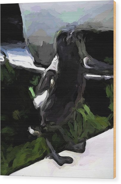 Black And White Magpie On The Porch Wood Print