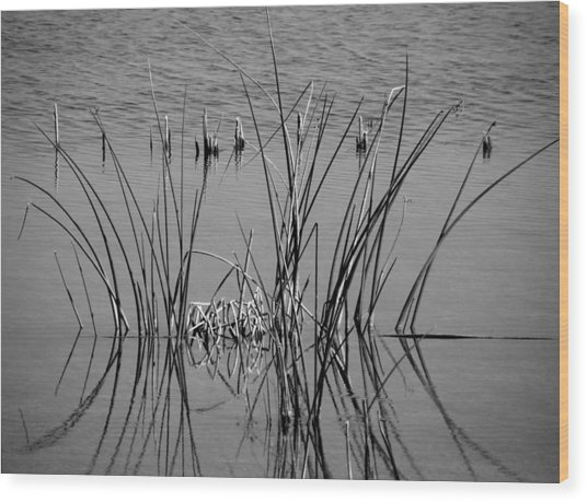 Black And White Marsh Design Wood Print by Rosalie Scanlon