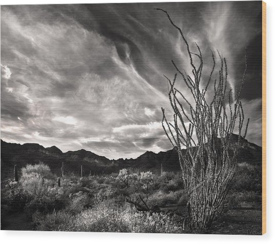 Black And White Ocotillo And Clouds Wood Print