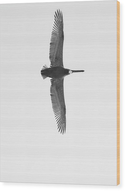 Black And White Pelican Wood Print