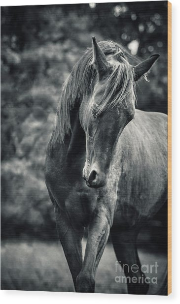 Black And White Portrait Of Horse Wood Print