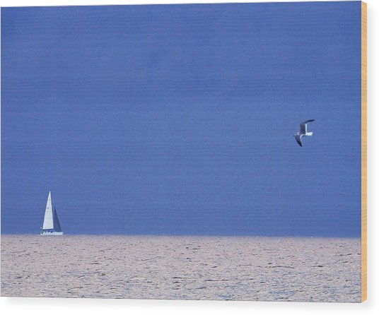 Black And White Sailboat And Seagull Wood Print
