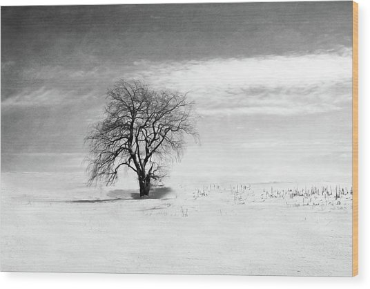 Black And White Tree In Winter Wood Print