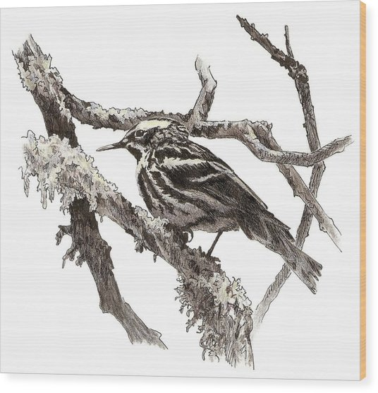 Black-and-white Warbler Wood Print