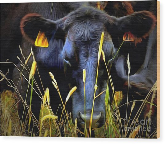 Black Angus Cow  Wood Print