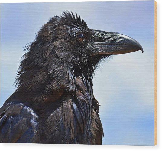 Black As Night - Raven Wood Print