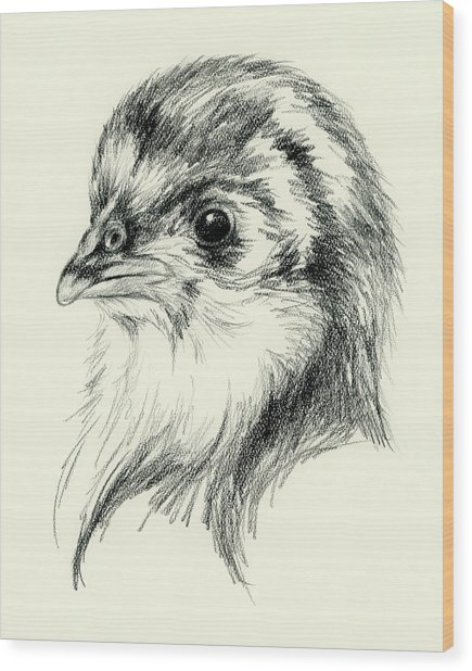 Black Australorp Chick In Charcoal Wood Print