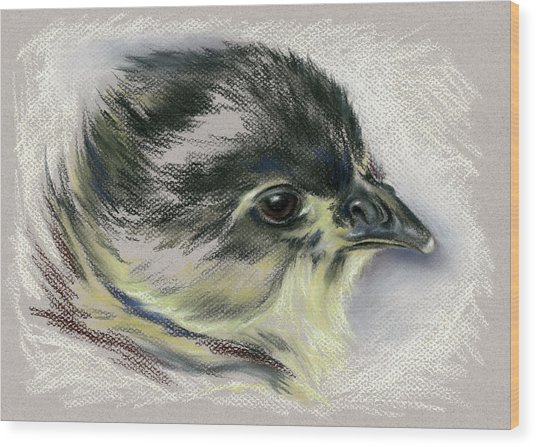 Black Australorp Chick Portrait Wood Print