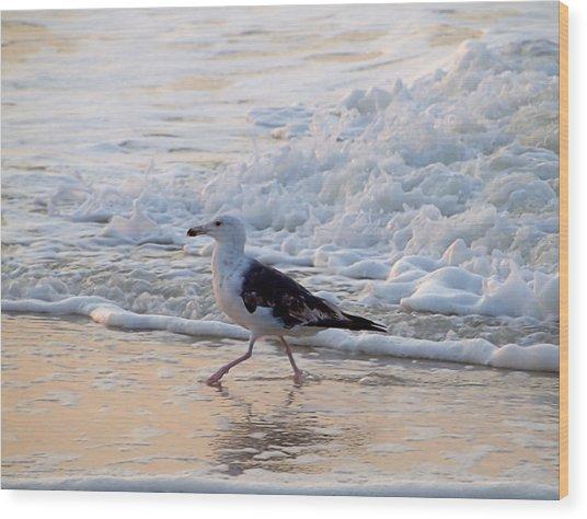 Black-backed Gull Wood Print