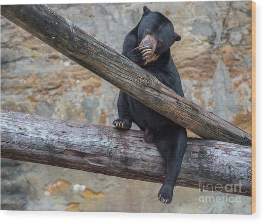 Black Bear Cub Sitting On Tree Trunk Wood Print