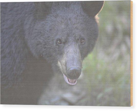 Black Bear  Wood Print by Glenn Vidal