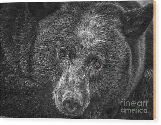Black Bear Portrait 3 Wood Print
