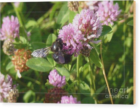 Black Bee On Small Purple Flower Wood Print