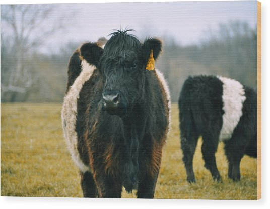 Black Belties Wood Print by JAMART Photography