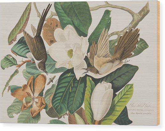 Black Billed Cuckoo Wood Print