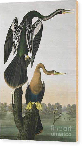 Black Billed Darter Wood Print
