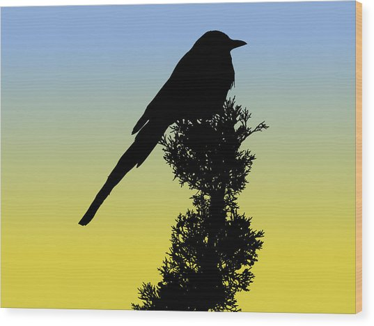 Black-billed Magpie Silhouette At Sunrise Wood Print