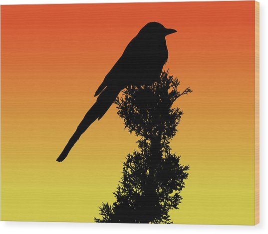 Black-billed Magpie Silhouette At Sunset Wood Print