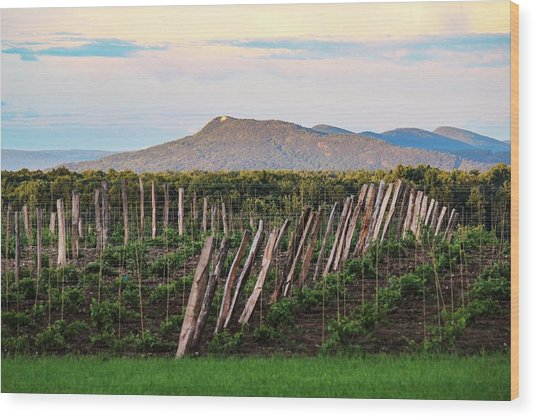 Black Birch Vineyard And Summit House View Wood Print