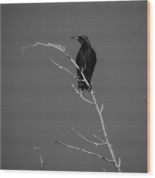 Black Bird On A Branch Wood Print