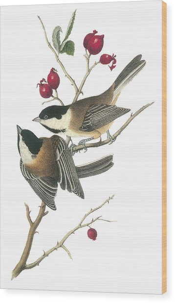 Black-capped Chickadee Wood Print by John James Audubon
