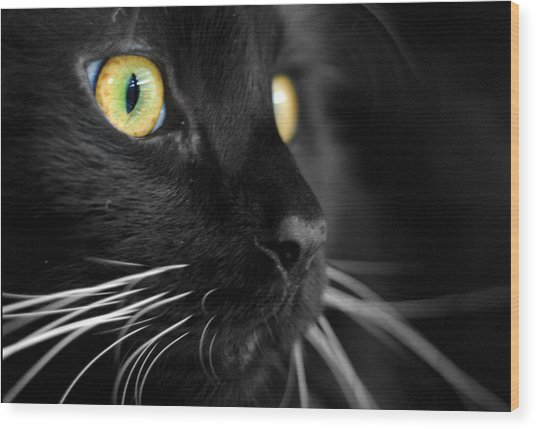 Black Cat 2 Wood Print