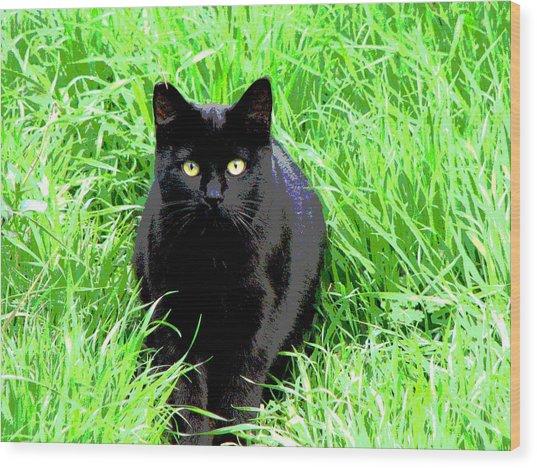 Black Cat In A Green Field Wood Print
