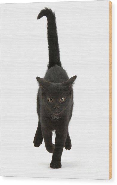 Black Cat On The Run Wood Print
