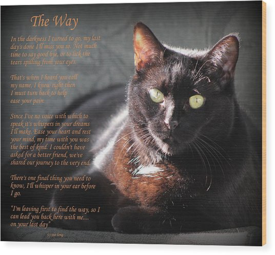 Black Cat The Way Wood Print