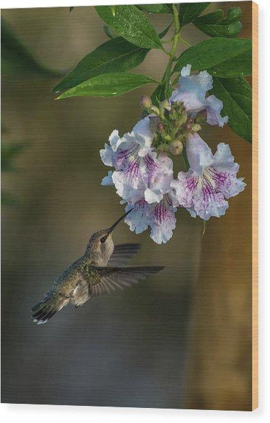 Black-chinned Hummingbird Wood Print
