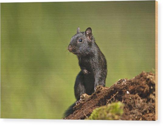 Black Chipmunk On Log Wood Print