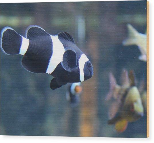 Black Clown Fish Wood Print by Aimee Galicia Torres