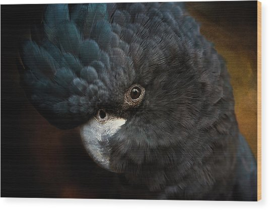 Black Cockatoo Wood Print