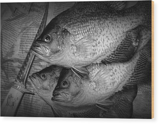 Black Crappie Panfish With Fish Filet Knife In Black And White Wood Print
