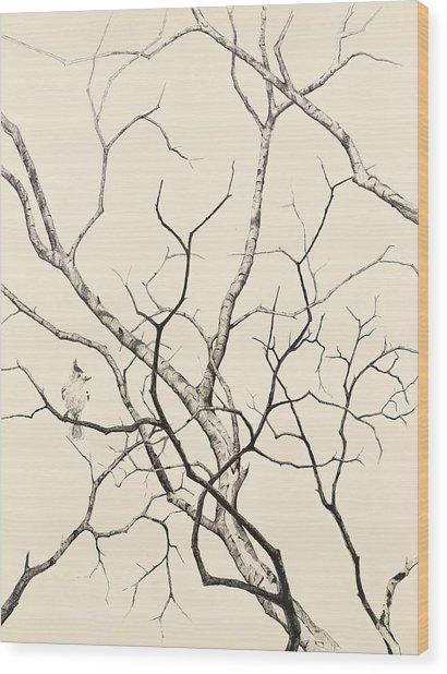 Black Crested Titmouse Wood Print by Paul Illian